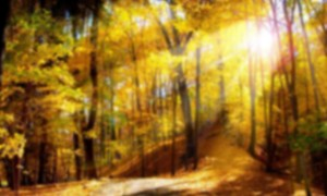 background_fall